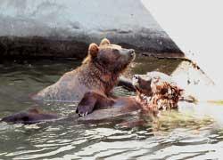 В Николаевском зоопарке более 2800 особей 350 видов животных. 80 из них занесены в Красную книгу.