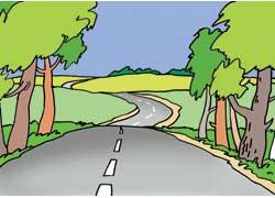 Выезд из лесного массива, лесополосы на открытую местность
