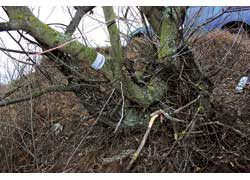 Определить среди сотни деревьев место, где находится контейнер с подсказкой, помогает вот этот знак.