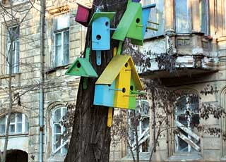 Птичья «коммуналка» на ул. Гоголя.