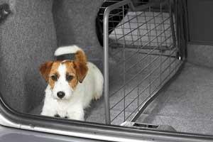 Собираетесь перевозить животных в машине – сажайте их в специальные корзины или в багажнике, сделав водонепроницаемою подстилку.
