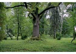 Будучи в Остроге, стоит посетить соседний город Гощу и прогуляться по его парку.