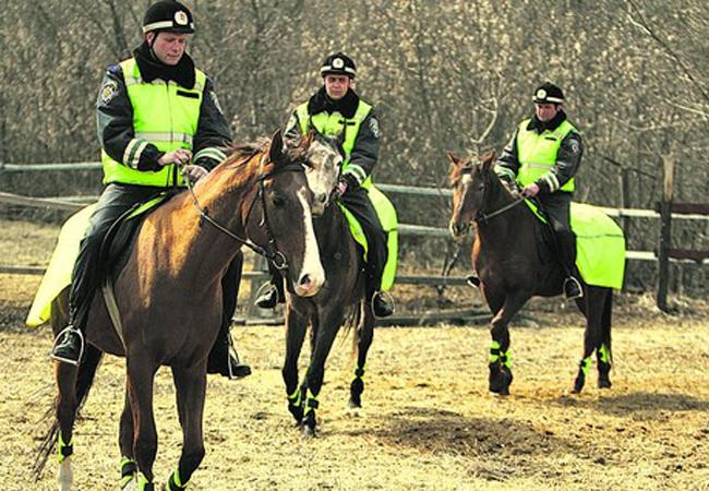 конный взвод патрульной службы