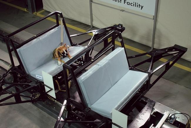 «Собачьи» краш-тесты учат правильно перевозить животных