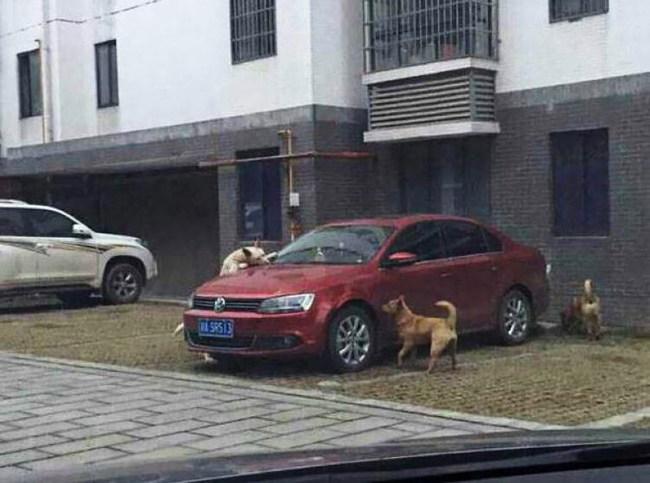 Собаки расквитались с автовладельцем