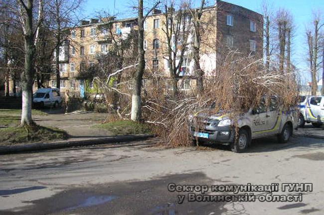 Срезанное дерево придавило патрульный автомобиль в Нововолынске